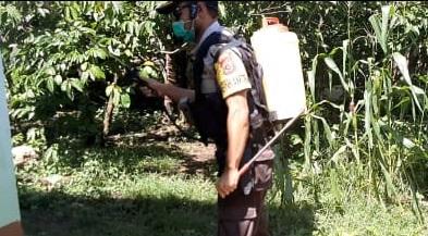 Cegah Penyebaran Corona   Bhabinkamtibmas Desa Sambi BRIGPOL Stanislaus Tandi Semprot Disinfektan